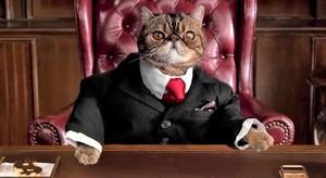 «Жирных котов» в накладе не оставят
