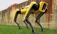 Роботы-псы с циклопами на стройках