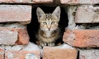 Хоть такая забота о бездомных животных