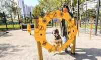 Собачья инфраструктура