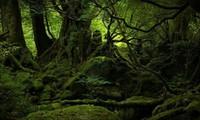 ЕСА послали… лесом