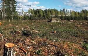 В лесах строить можно, но по закону