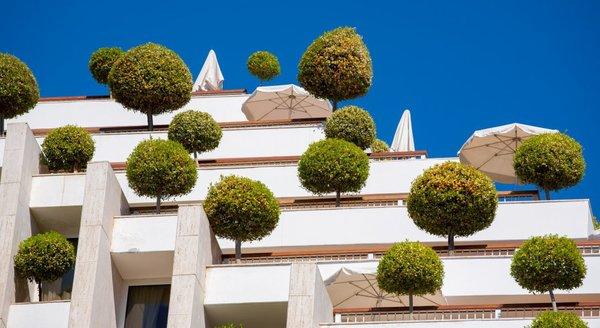 Как посадить дерево... на крыше