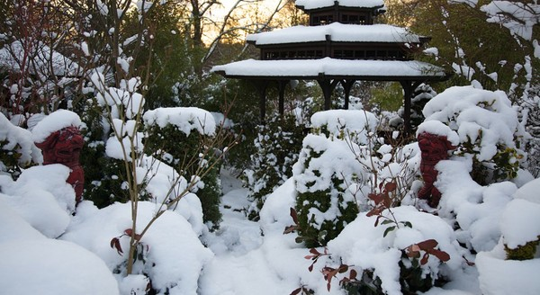 Этот дивный зимний сад