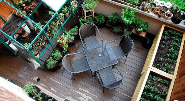 Мини-сад в вашей квартире